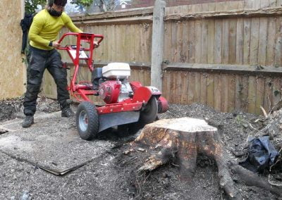 Tree and Stump Removal, Beckenham, 6
