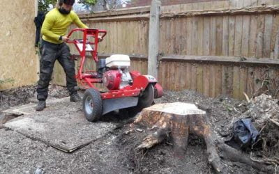 Tree and Stump Removal, Beckenham