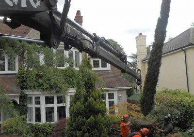 Tree Planting with Crane