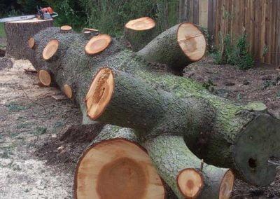 Felled cedar tree trunk
