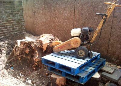 Darwin Tree Services removing a large tree stump in Brixton, South London