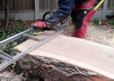 Darwin Tree Services planking an oak tree in Bromley, 5
