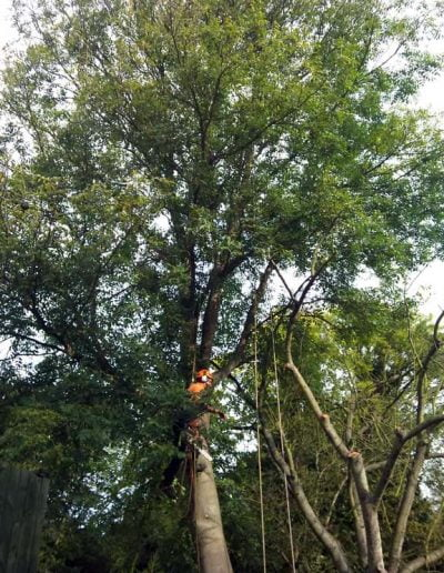 Tree Surgery in Petts Wood, 1