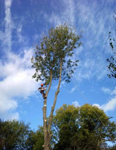 Tree Surgery in Petts Wood, 2