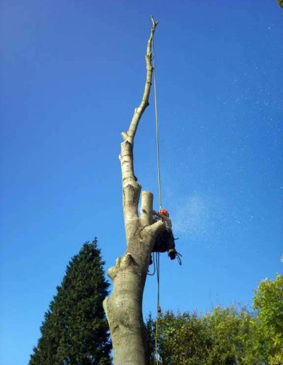 Tree Surgery in Petts Wood, 4