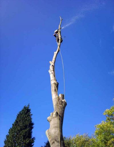 Tree Surgery in Petts Wood, 5