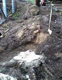 Tree Stump Removal, before