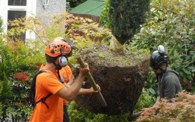 Tree Planting, Chislehurst
