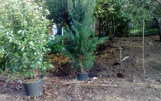 Planting trees in Bromley