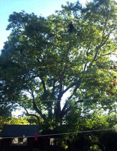 Tree Surgery in Keston BR2, 1