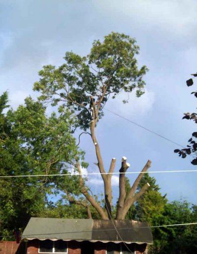 Tree Surgery in Keston BR2, 4