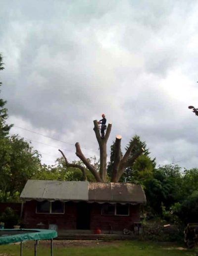 Tree Surgery in Keston BR2, 5