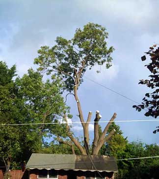 Tree Surgery in Keston BR2