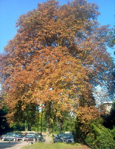 Tree Reduction in Bromley, 1