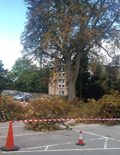 Tree Reduction in Bromley, 3