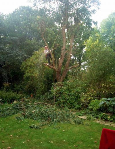 Eucalyptus removal, 1