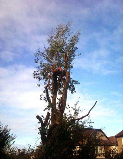 Eucalyptus removal, 3