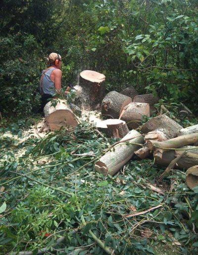 Eucalyptus removal, 5