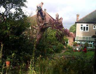 Eucalyptus Removal, Beckenham