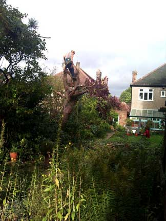 Tree Surgery in Beckenham