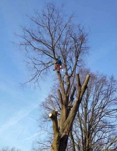 Tree Surgery Biggin Hill, 1