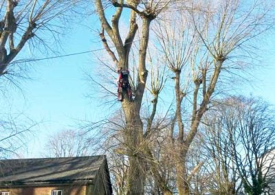 Poplar Tree Removal, Biggin Hill, 1