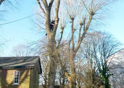 Poplar Tree Removal, Biggin Hill, 2
