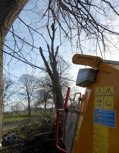 Tree Surgery Biggin Hill, 2