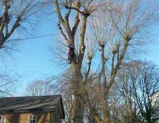 Poplar Tree Removal, Biggin Hill