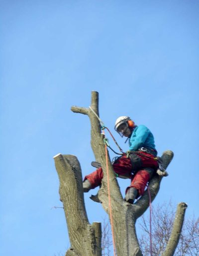 Tree Surgery Biggin Hill, 3