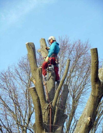 Tree Surgery Biggin Hill, 5