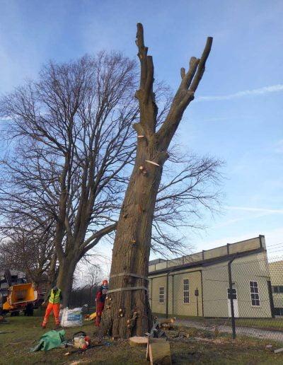 Tree Surgery Biggin Hill, 6