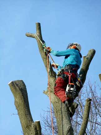 Tree surgery Biggin Hill