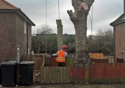 London Plane Tree Removal, Bromley, 2