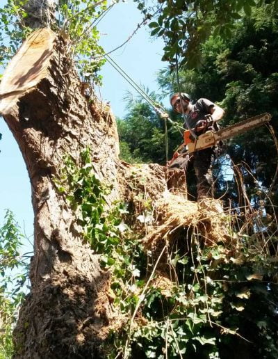 Tree Surgery in Norwood, 1