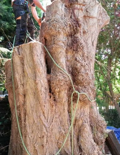 Tree Surgery in Norwood, 2