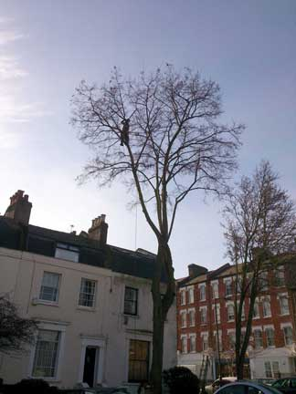 Tree Surgery Peckham