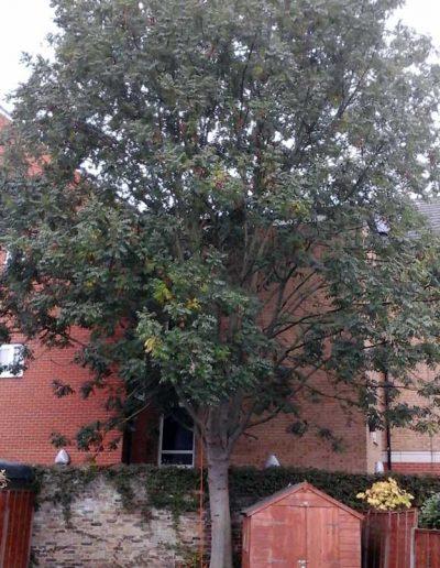 Tree Surgery in Penge, 1