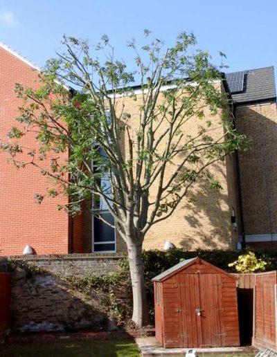 Tree Surgery in Penge, 2