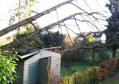 Emergency Tree Surgery Sevenoaks, 2