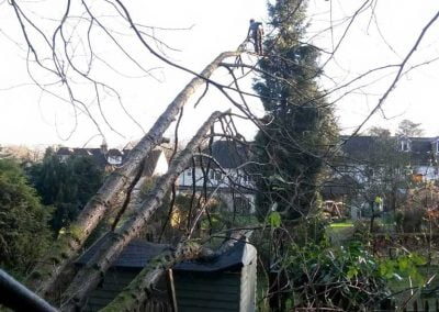 Emergency Tree Surgery Sevenoaks, 3