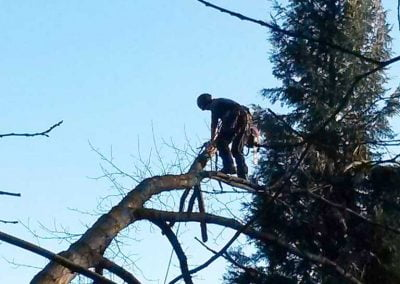 Emergency Tree Surgery Sevenoaks, 4