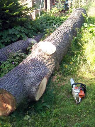 Tree Surgery and Planking in Sutton