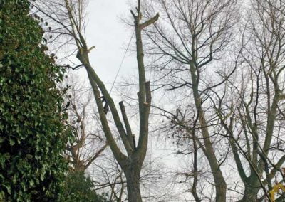 Tree Surgery in Telegraph Hill, 1