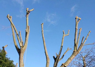 Tree Surgery in Telegraph Hill, 4