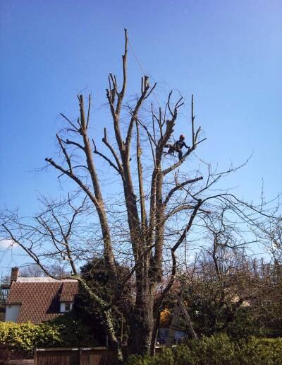 Tree Surgery Dulwich