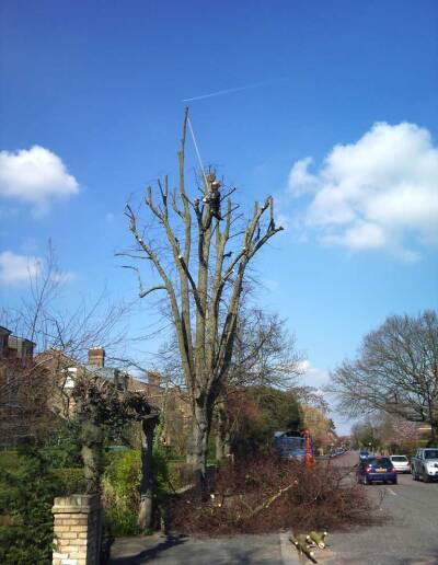 Tree Surgery Dulwich 2