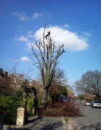 Tree Surgery Dulwich, 1